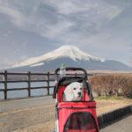 山梨県南都留郡鳴沢村 富士山