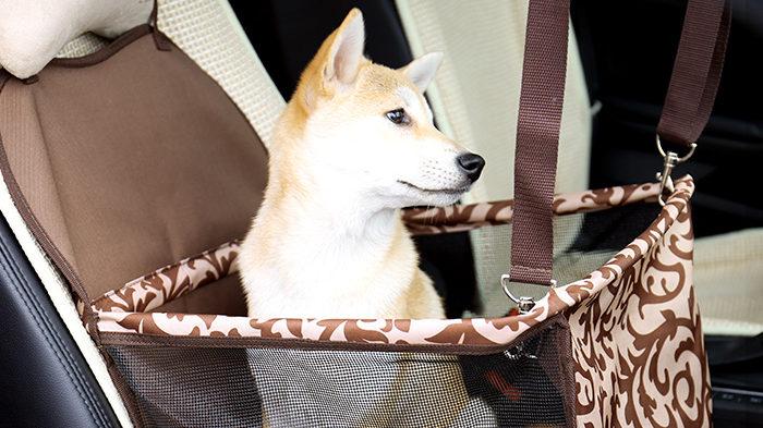 ペットと車中泊…注意することは?